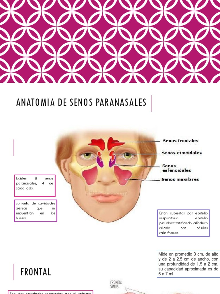 Anatomia de Senos Paranasales Otorrinolaringologia