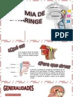 ANATOMIA de LA FARINGE Otorrinolaringologia