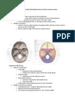Anatomy- Skull Features