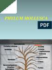 Clase 7 Mollusca