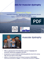 Animal Models for Muscular Dystrophy