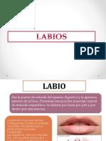 Lesiones de Labios y Paladar