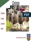 zoote general ovino11.pdf