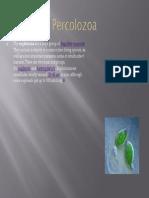Percolozoa
