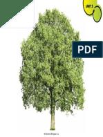 6b5ab Tree