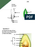 Fruit Pract Test