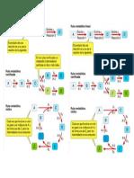 Ficha rutas metabólicas