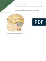 Estructura funcional del Sistema Nervioso I