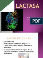 lactasa.pptx