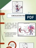 Circulacion Fetal Rcp
