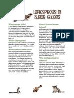 leptospirosis in sugar gliders