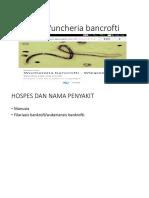 Filariasis Wuncheria Bronchifti