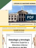 Seminario Osteologia