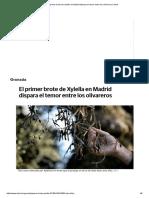 El Primer Brote de Xylella en Madrid Dispara El Temor Entre Los Olivareros _ Ideal