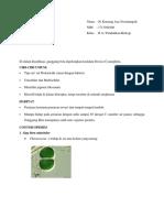 tugas cyanophyta