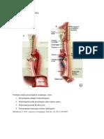 4 penyempitan esofagus