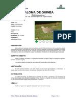 Ficha PALOMA de GUINEA _Columba Guinea