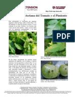 Mancha Bacteriana Del Tomate y El Pimiento