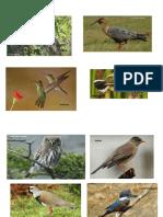 Aves de Chile.docx