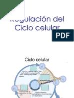 Regulacion Del Ciclo Celular 222