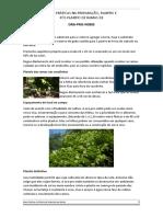 Boas Práticas Na Preparação, Plantio e Pós Plantio de Ora-pro-nobis