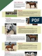Types Horses