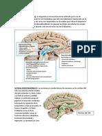 SISTEMA Neurotrasmisores