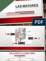 GLÀNDULAS-MAYORES.pptx