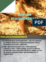 Clase 9 Phylum Echinodermata