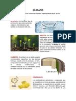 Glosario de Fisiologia Vegetal Tutoria 1