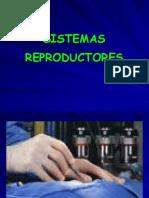 13. Sistema Reprodutores.ppt