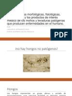 Exposicion microbiologia - Hongos