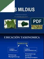 11. Los Mildius