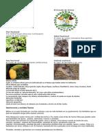 Investigacion Centro America