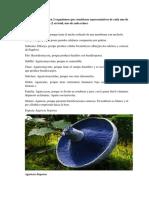 Aporte de Biologia REINO FUNGI.docx