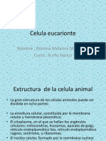 Celula Eucarionte Madeleyn 8 Basico