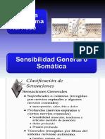 Clase 8 Sensibilidad General