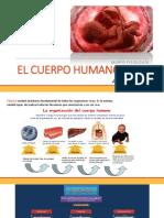 elcuerpohumano-170602003846