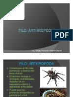 Vi. Reino Animal_artropodos