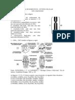 Lista de Exercícios Divisão Celular (1)