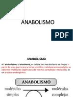 1.ANABOLISMO