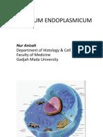 Reticulum Endoplasmicum Ans