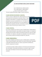 Terminología Anatómica Detallando Funciones