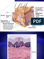 Histology Slides From Systems of the Book