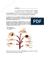 Sistema nervioso de los vertebrados.docx
