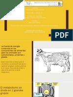Carbohidratos..pptx
