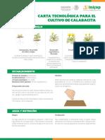 4. Calabacita