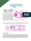 Observacion de Embriones- Cavidad Abdominal. Aparato Renal LAB EMBRIO