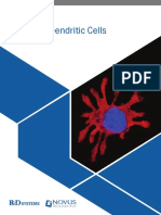 Rnd Systems Dendritic Cells Br