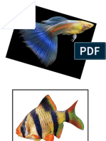 ikan emas.docx